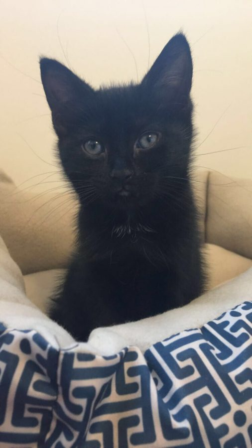 Kutz%27%C2%A0six-month-old+cat+Bentley+is+her+emotional+support+animal%2C+who+she+could+not+imagine+life+without.