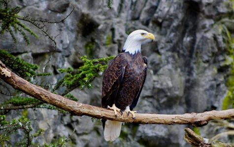 The RogerWilliams Zoo is so much fun it should be ill-eagle
