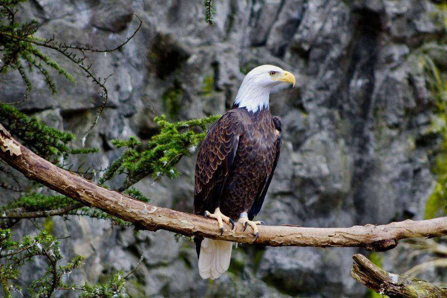The Roger Williams Zoo is so much fun it should be ill-eagle
