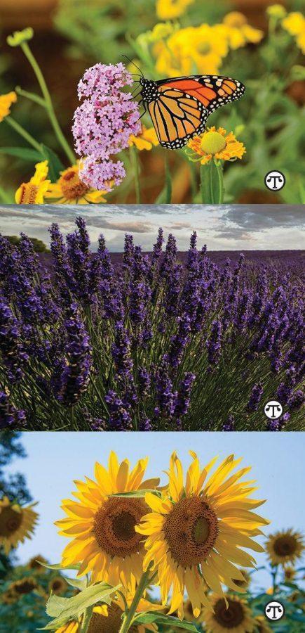 Make+Your+Garden+Count+For+Butterflies