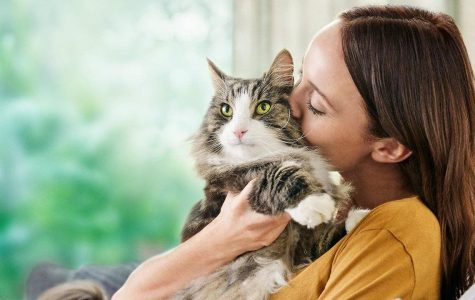 4 smart steps to manage cat allergens at home