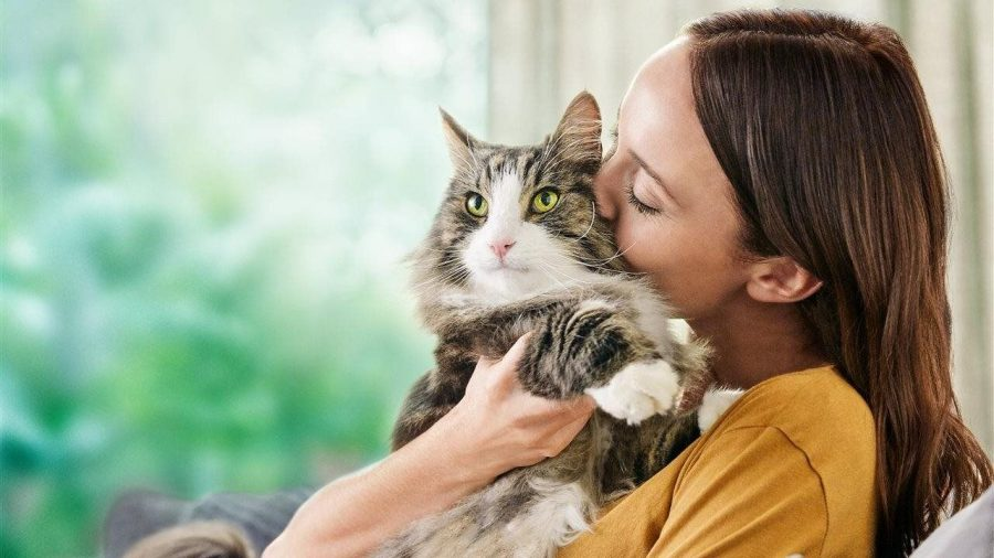 4+smart+steps+to+manage+cat+allergens+at+home