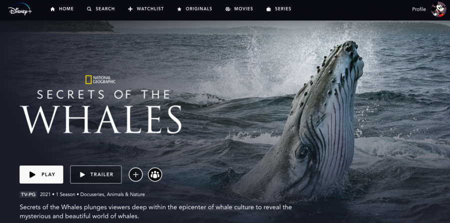 Disney%2B+has+recently+released+their+new+documentary+series%2C+%22Secrets+of+the+Whales.%22+The+series+consists+of+four+episodes+with+each+one+dedicated+to+a+type+of+whale.+