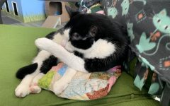 Mauricio the cat found the couch the most comfortable at Bajah's Cat Cafe in Tiverton.